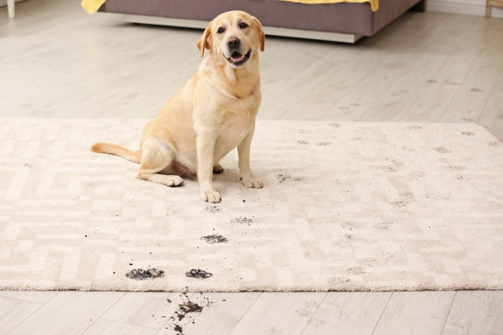Best Rug Materials in a Home with Pets | McCurleys National Flooring